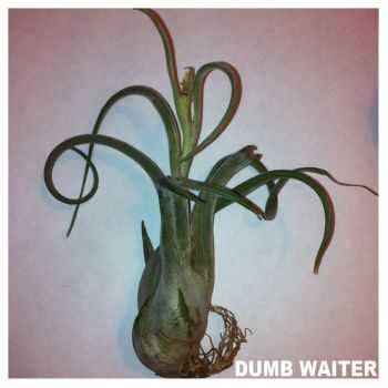 Dumb Waiter - Is This Chocolate? (2013)