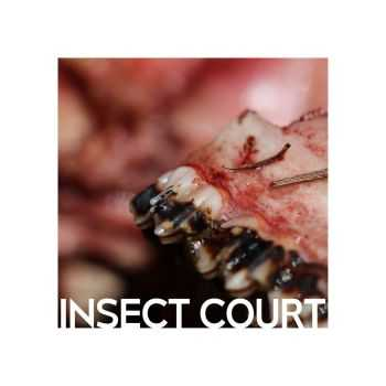 Insect Court - Insect Court (2015)